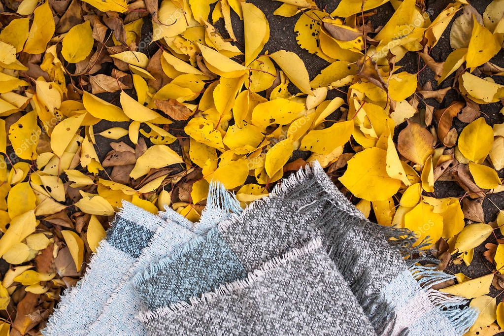 Closeup of scarf with yellow leaves isolated place for text