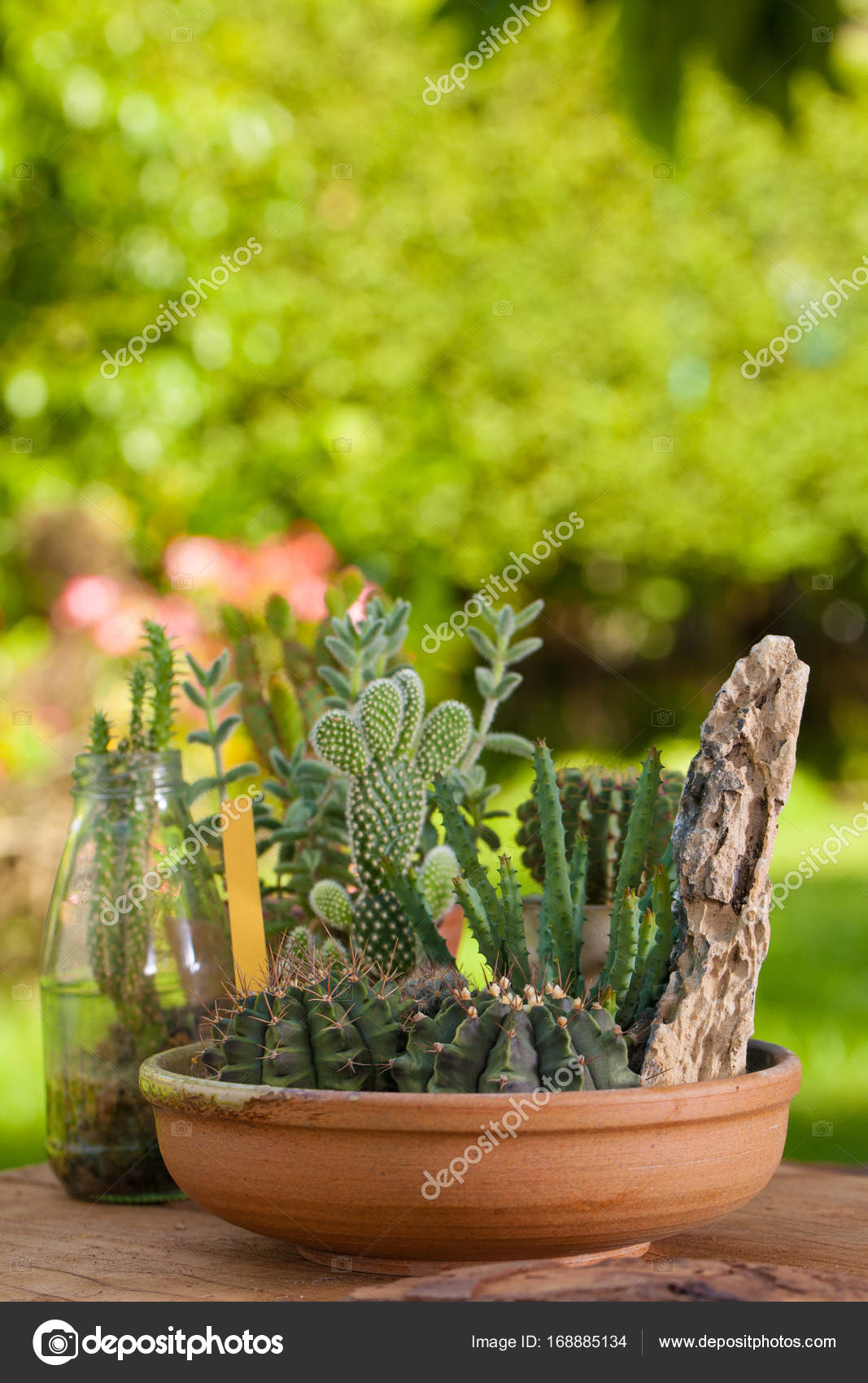 Mini Cactus Garden Put With Stone Arranged In Wide Pot Or Round Ceramic  Tray With Garden