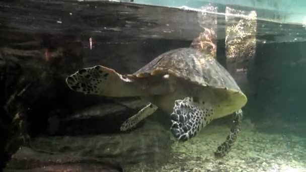 turtle swimming in an aquarium 01