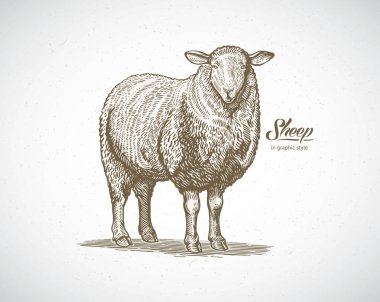 Farm sheep animal label