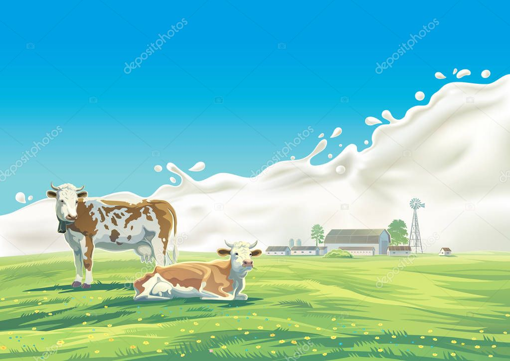 Two cows and splash milk.
