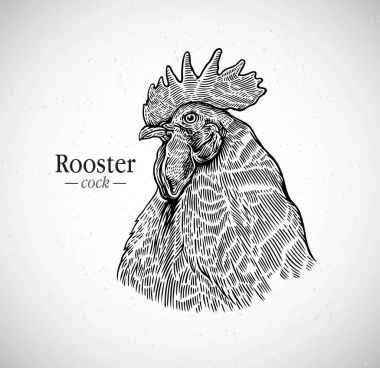 Rooster head in graphic style. Illustration drawn by hand on paper and converted to vector. clip art vector