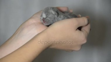 little blind kittens born today the size of a palm of a child