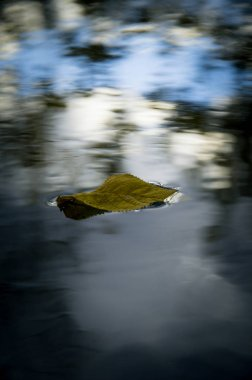a leaf of the tree on the water