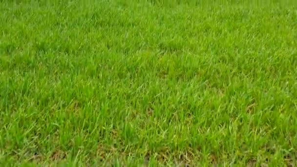 Flight across the field with green wheat