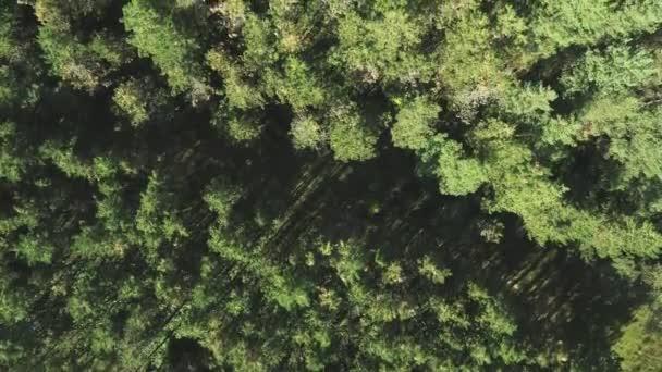 Krásný zelený jehličnatý les shora, střílející z dronu