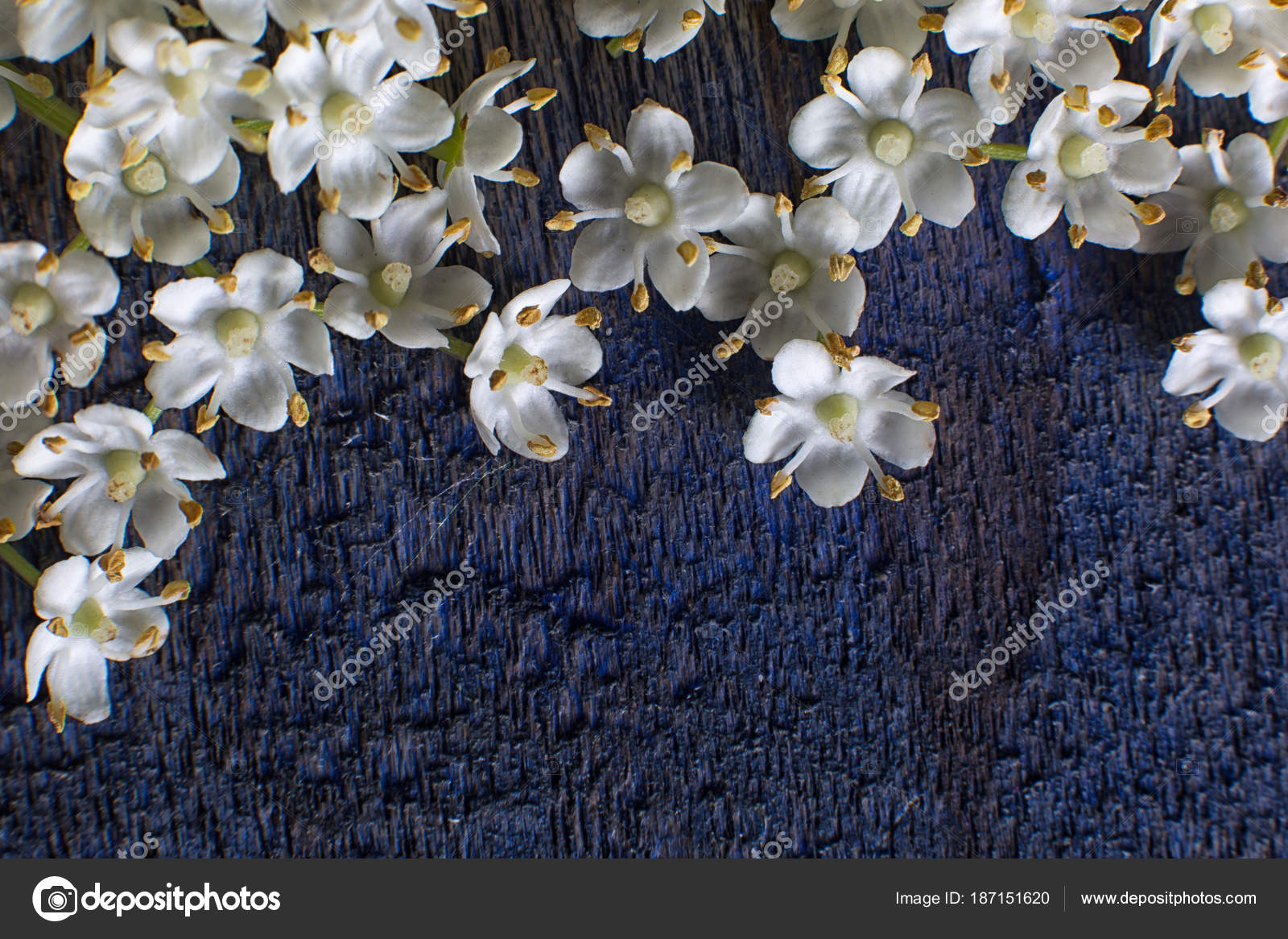 Small White Flowers Rustic Wood Background Stock Photo