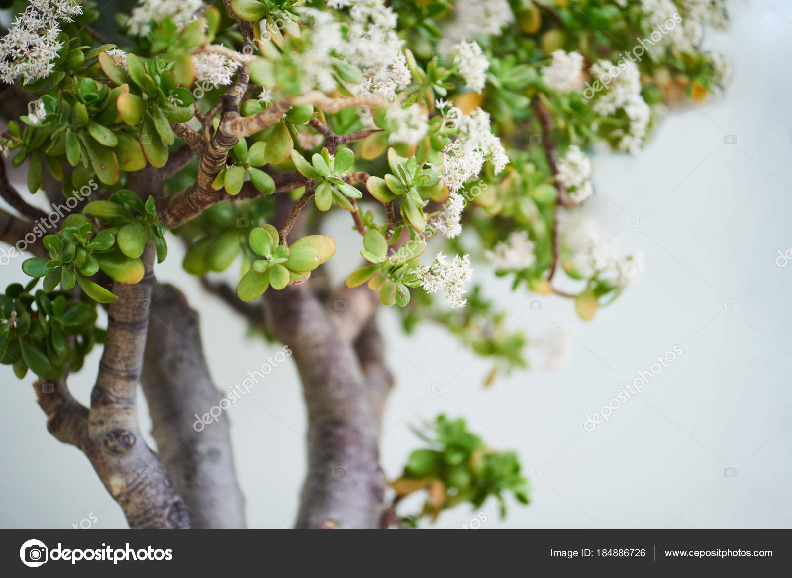 Closeup Little Blossoming Tree Green Leaves White Flowers Stock Photo C Agavestudio 184886726
