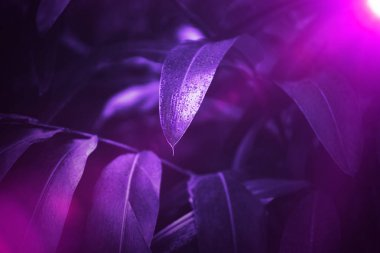 Ultra violet background made of fresh plants. Floral dynamic backdrop for your design.