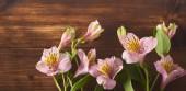 Fotografie Krásné růžové květy na dřevěné pozadí. Pohled shora