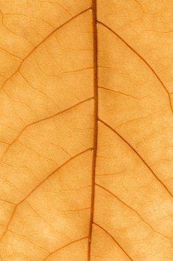 Macro of a dry leaf