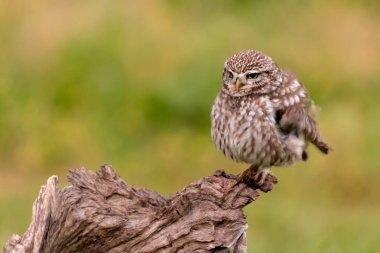 Cute owl sitting on old tree