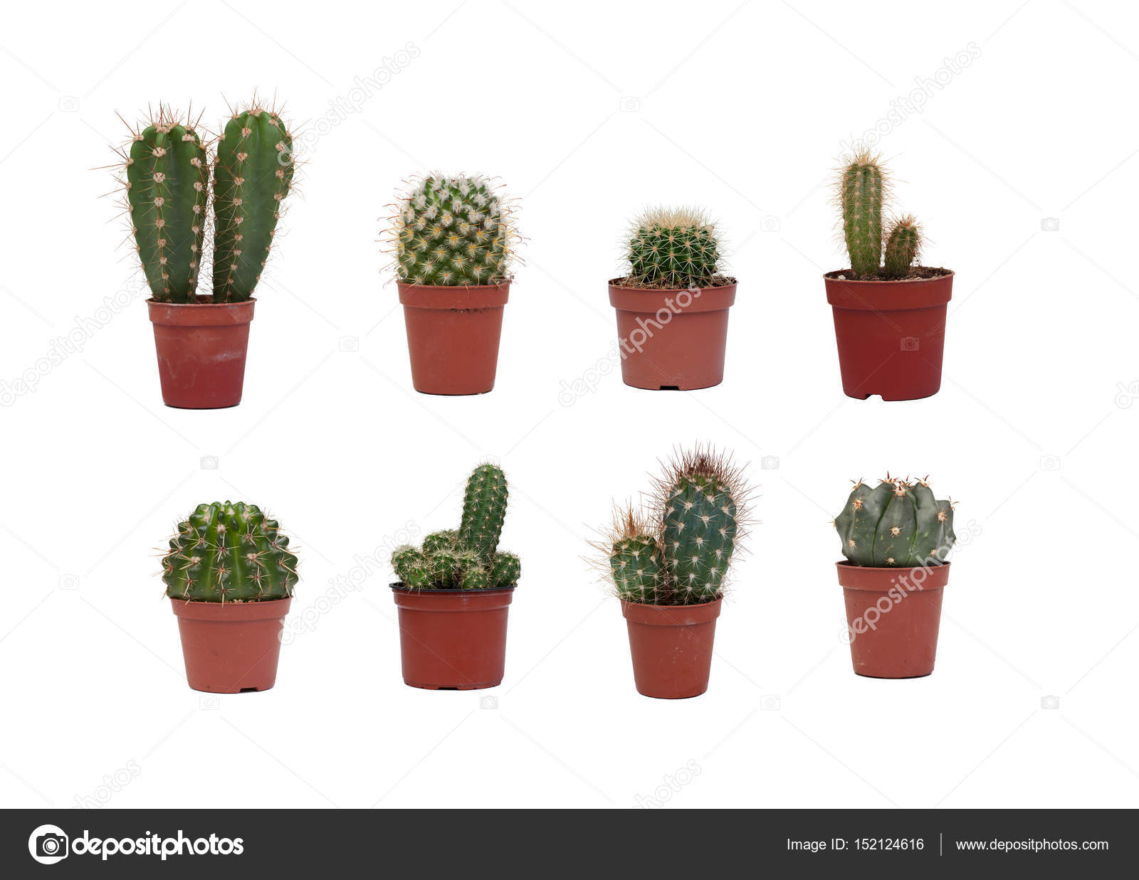 Eight different cactus plants stock photo gelpi 152124616 for Different types of succulent plants