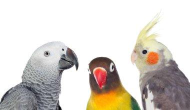Three tropical birds