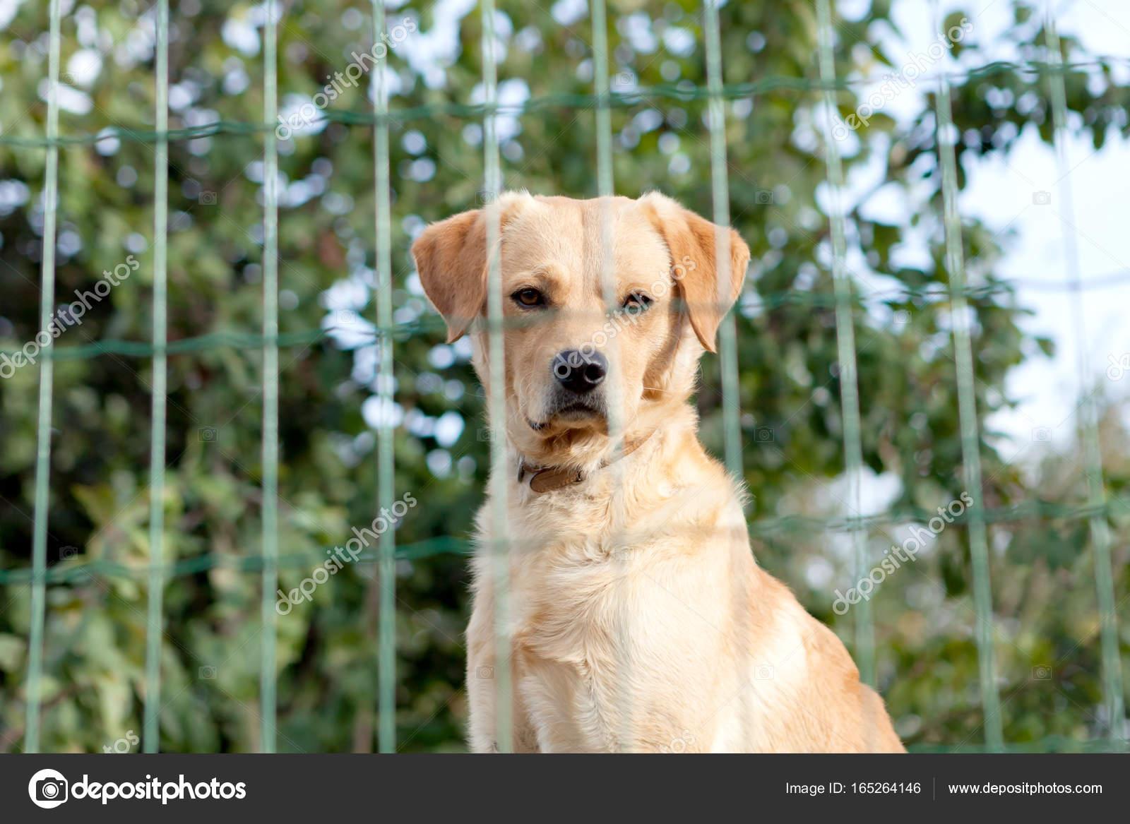 Chien de garde derri re une cl ture de jardin photographie gelpi 165264146 - Cloture chien jardin ...