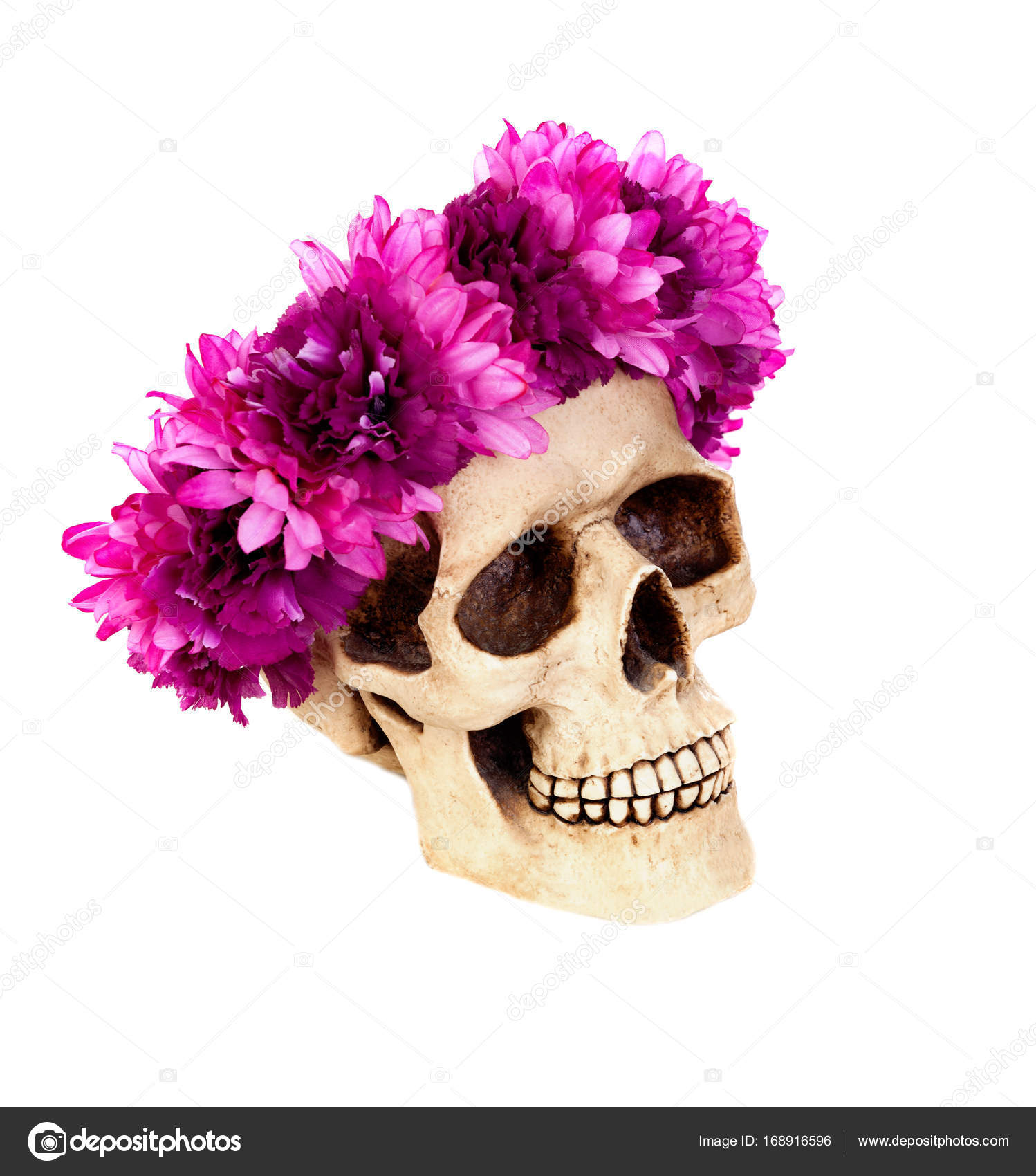 Human skull with wreath of pink flowers stock photo gelpi 168916596 creepy human skull with wreath of pink flowers isolated on white background photo by gelpi mightylinksfo