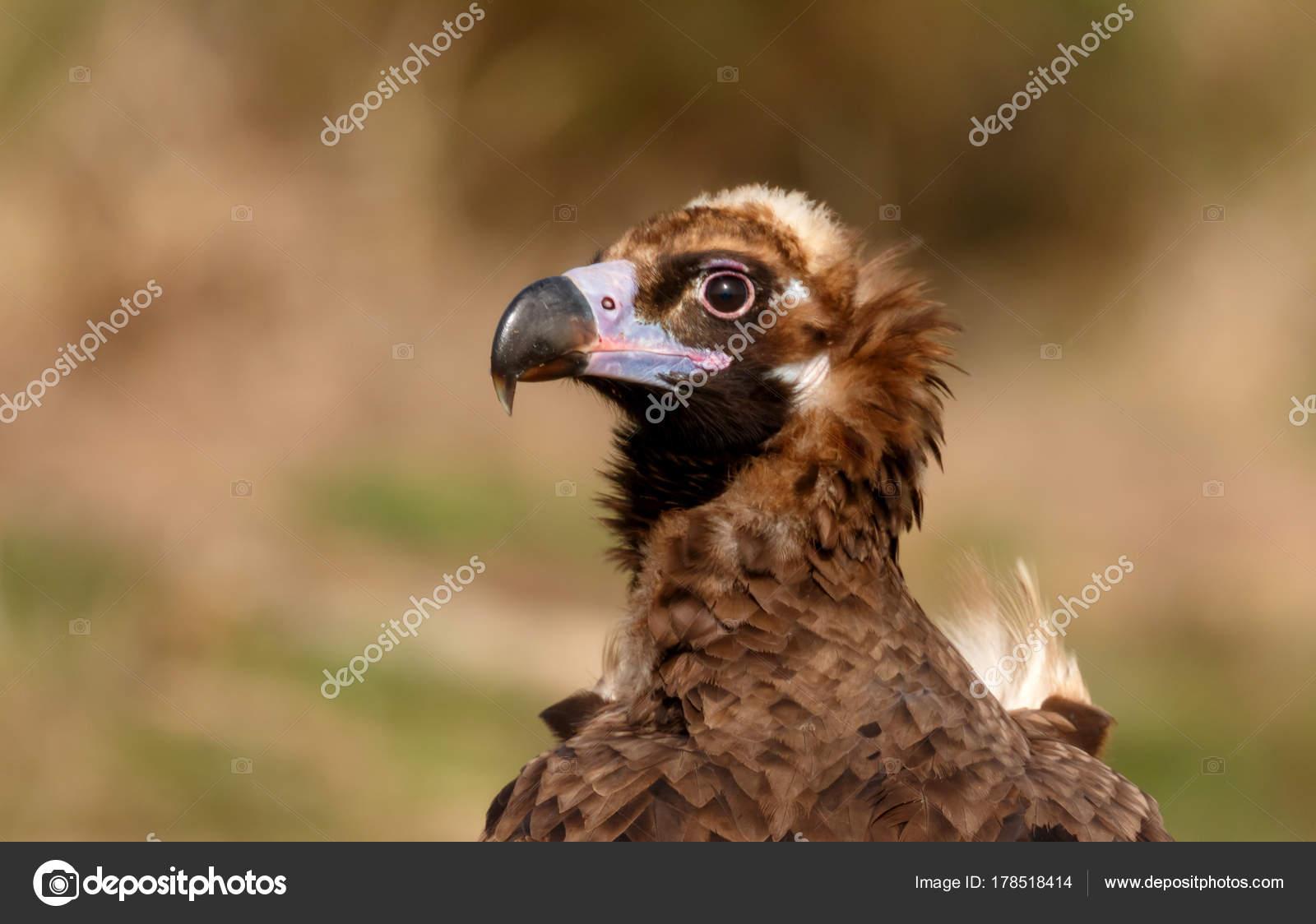 obrovské skutečné ptáky