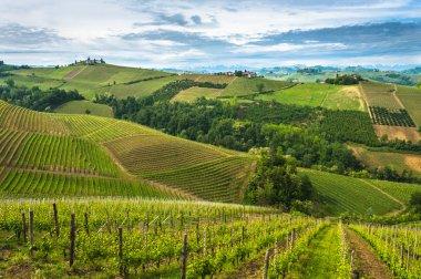 Vineyards of Langhe panorama, Piedmont