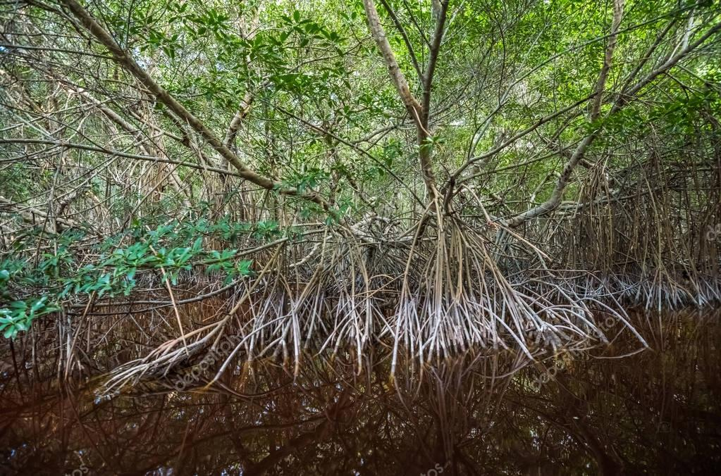 Mysterious mangrove forest