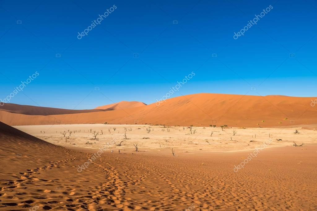 Dead Camelthorn Trees and red dunes in Deadvlei