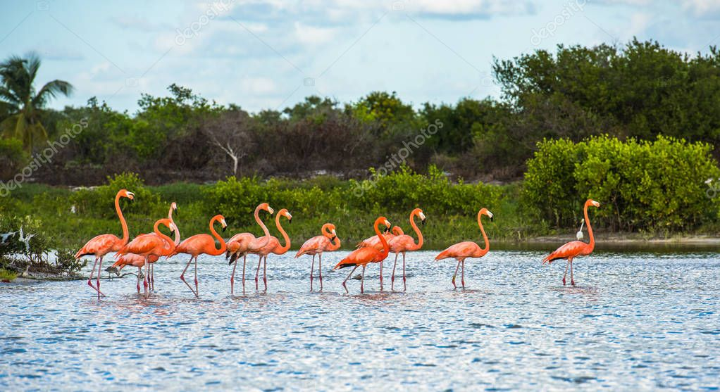 Flamingoes at Celestun Biosphere Reserve