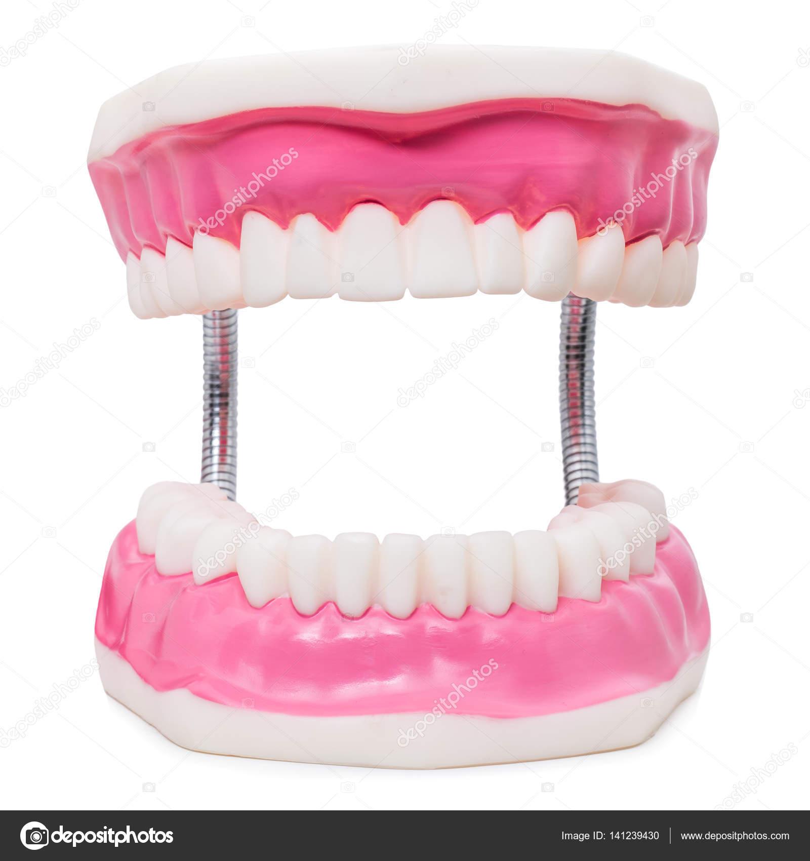 Prótesis de gran tamaño de los dientes humanos — Foto de stock ...