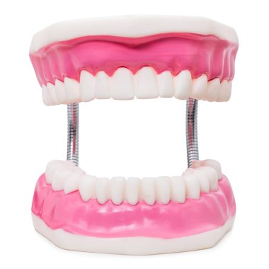 Oversize human teeth prosthesis