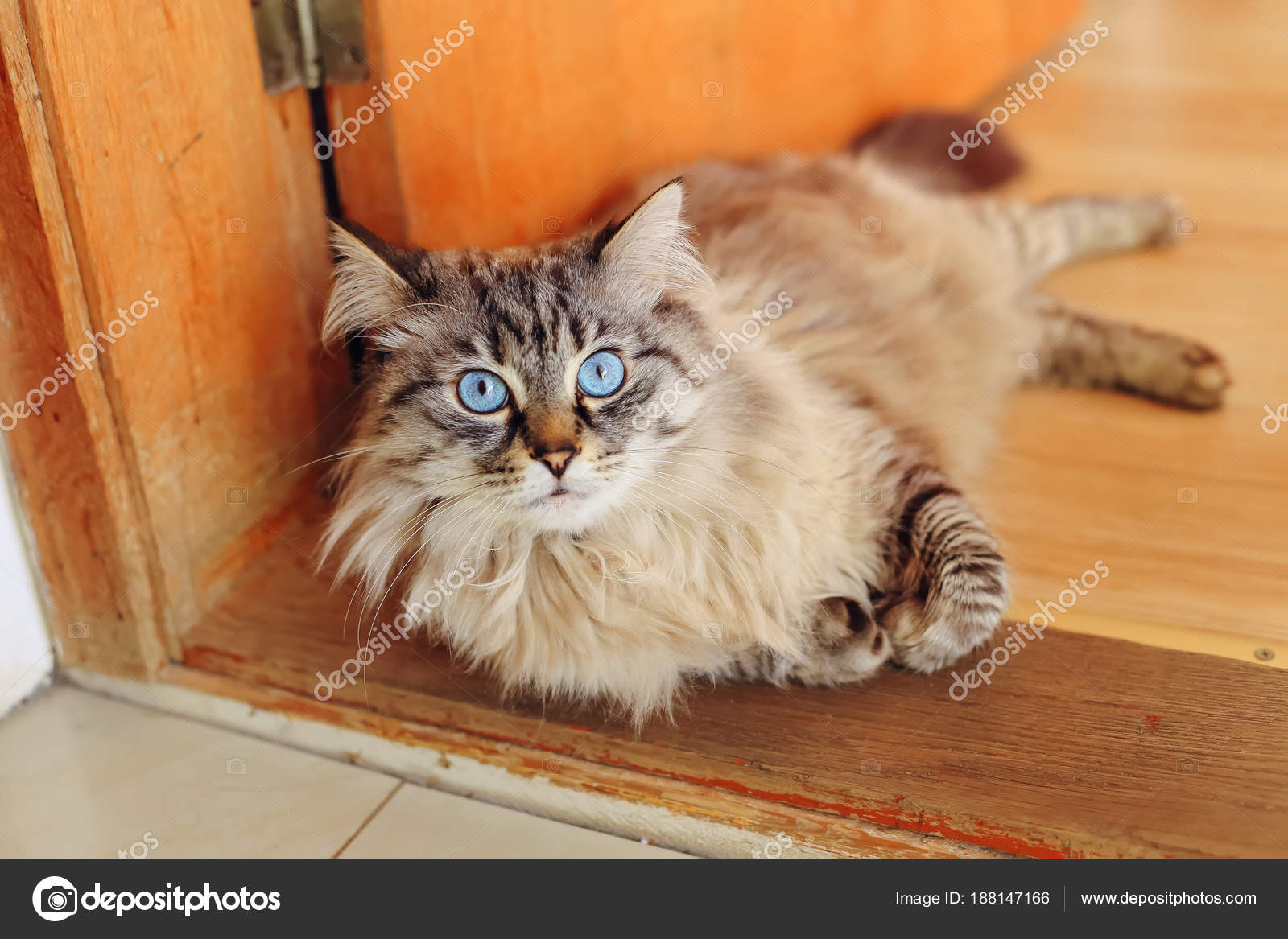 9b8b1dcfb8 Gato Está Acostado Puerta Mira Lente Cámara — Foto de stock ...