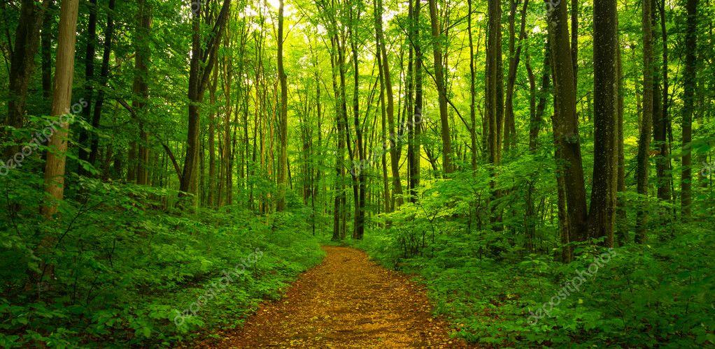 ⭐️ Cảnh Đẹp Mùa Xuân Trên Thế Giới ⭐️ Depositphotos_127134362-stock-photo-beautiful-scenery-in-the-forest
