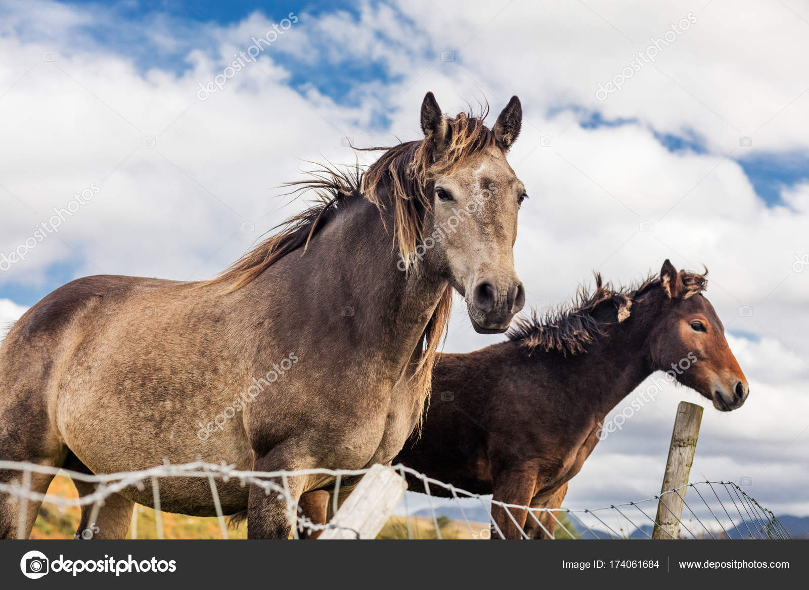 Pferde Irland