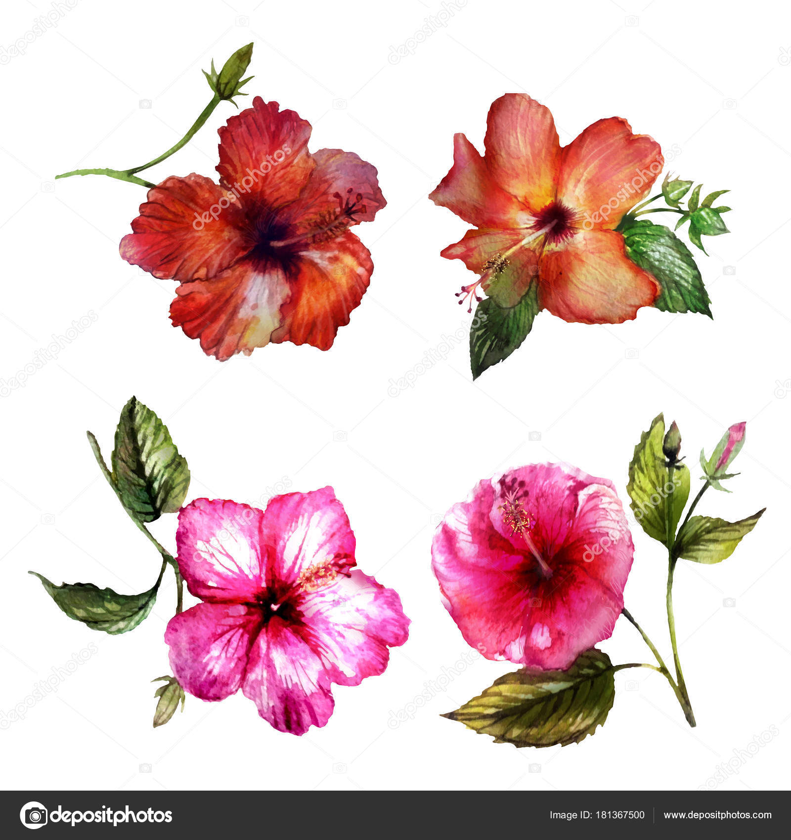 Flowers Hibiscus Watercolor Vector Stock Vector Own I 181367500