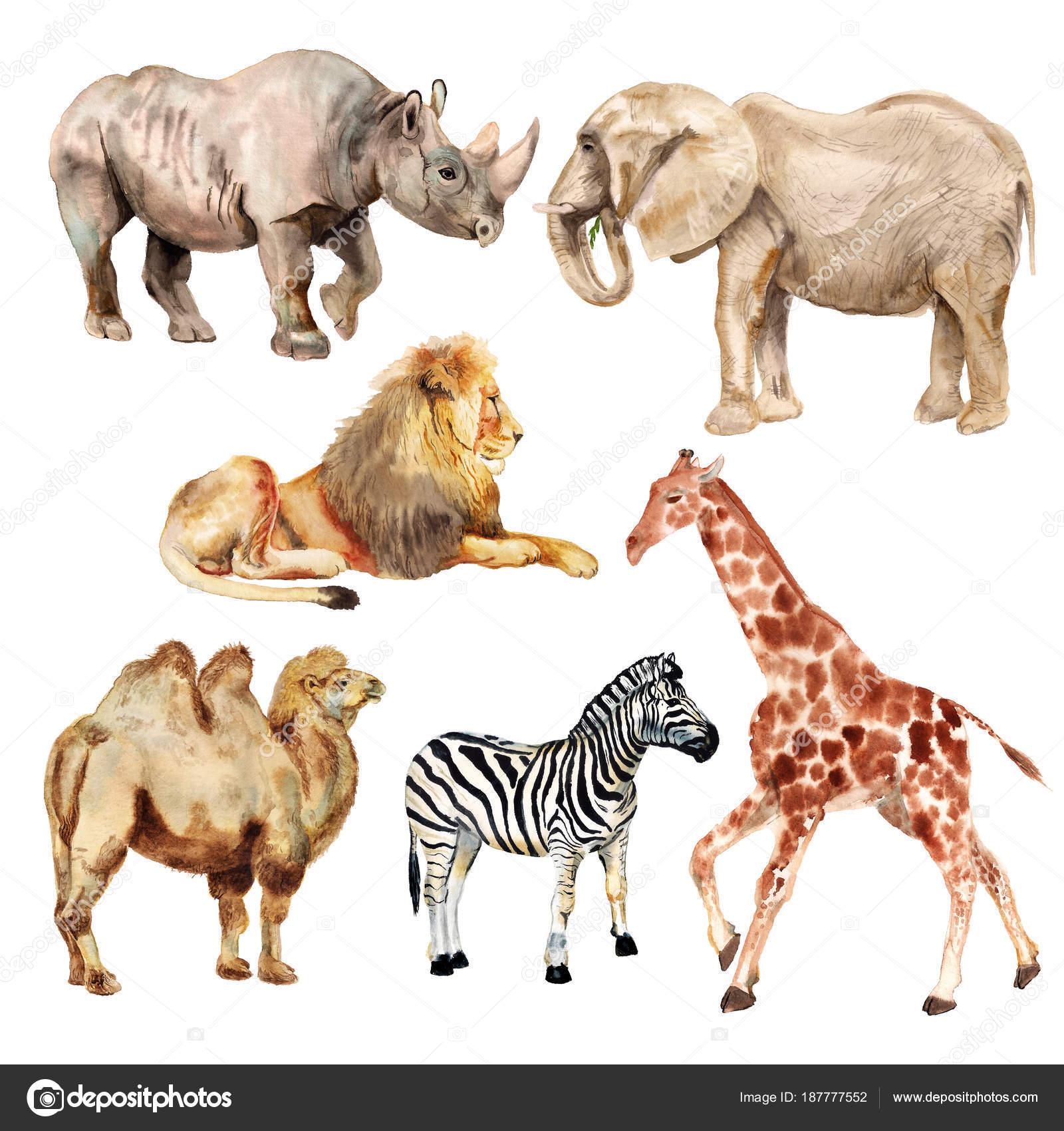 Самыесамые животные в мире  ZooPictureru