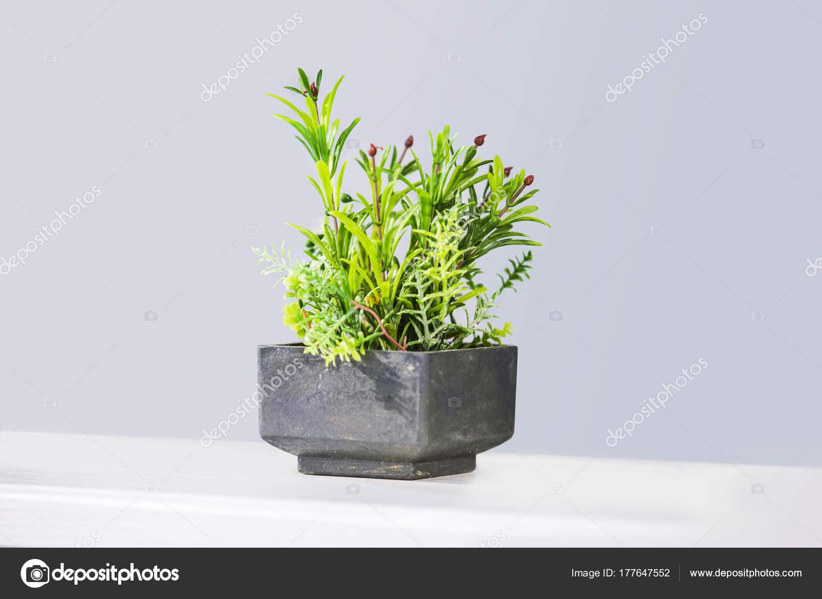 Schöne Zimmerpflanzen In Trendigen Geometrischen Töpfen Gefälschte