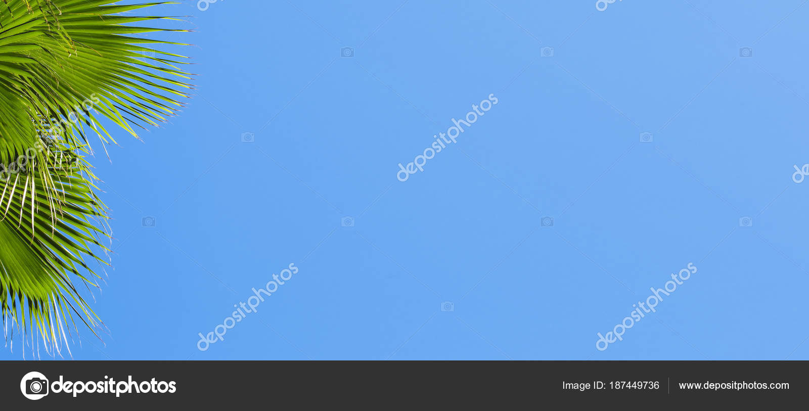 Isoler Les Feuilles Du Palmier Dattier Pour La Banniere De Publicite Carte Visite Images Stock Libres Droits