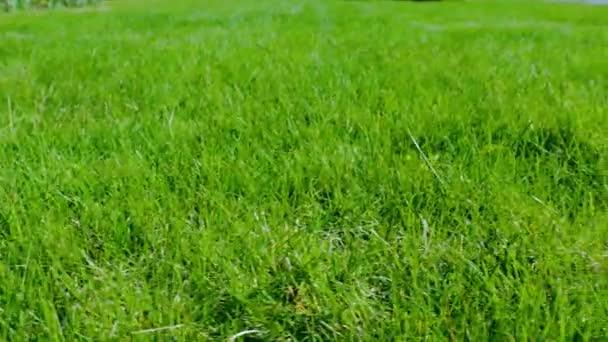 Krásný výhled na přední dvorek soukromé zahrady. Zelený trávník. Krásné pozadí.