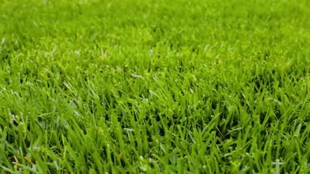 Schöne Aussicht auf den Vorgarten des privaten Gartens. Grüner Rasen. Schöne Hintergründe.