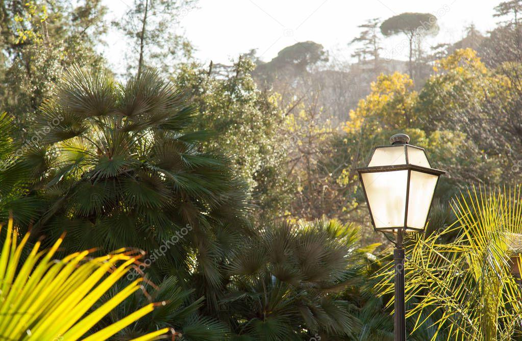 Sunny botanical garden