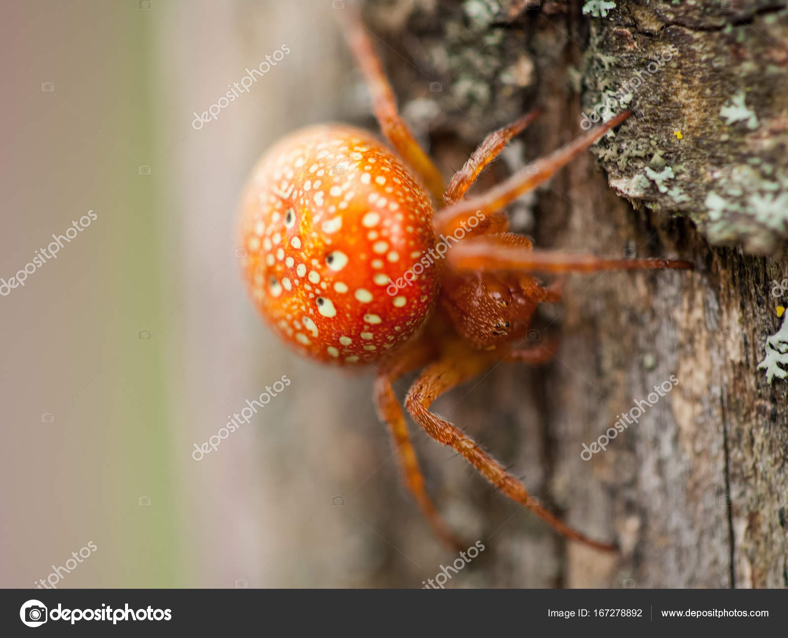 Spin Einloggen