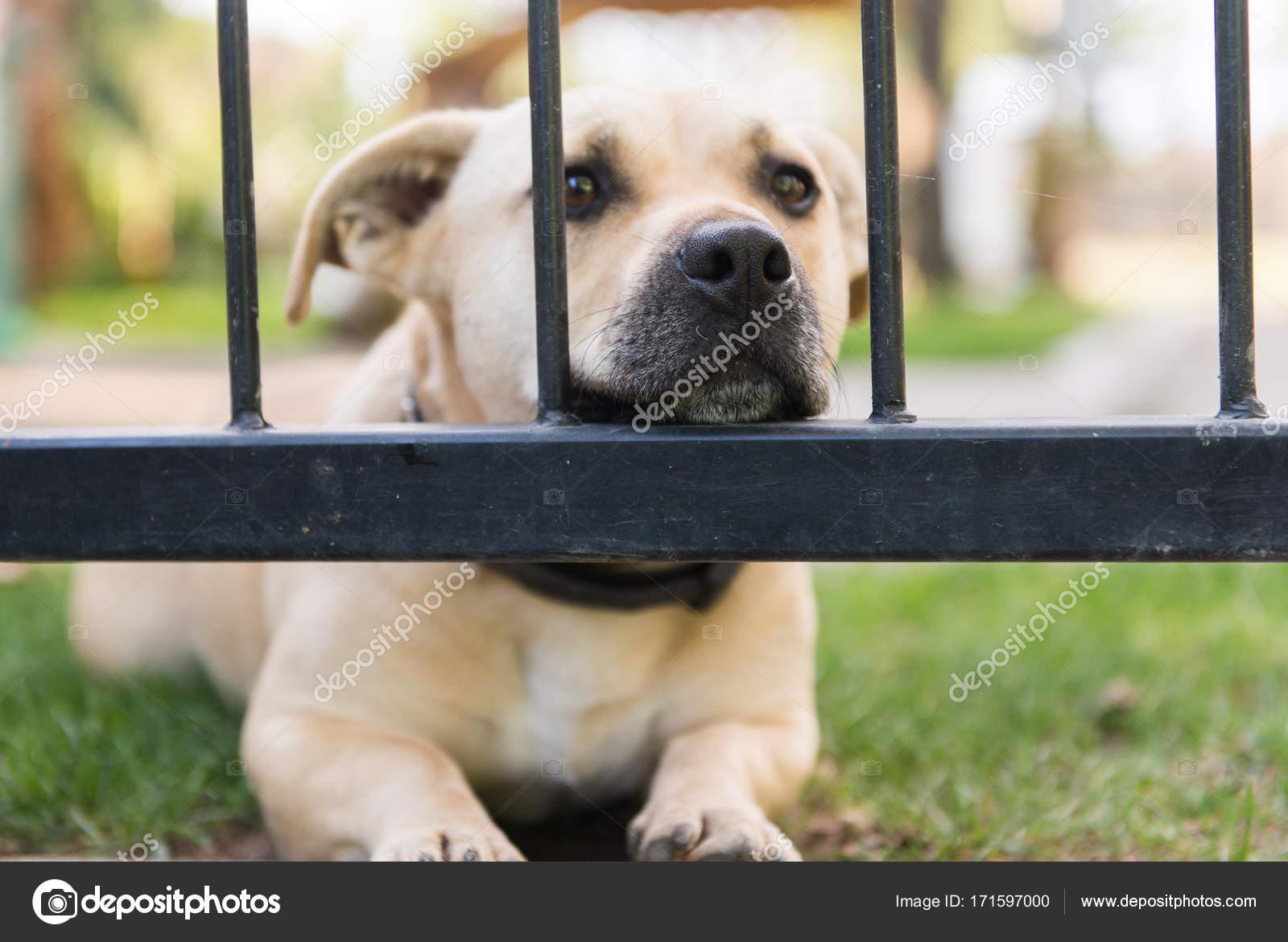 Niedlichen Kleinen Hund Durch Die Gitter Zaun In Den Garten Schauen