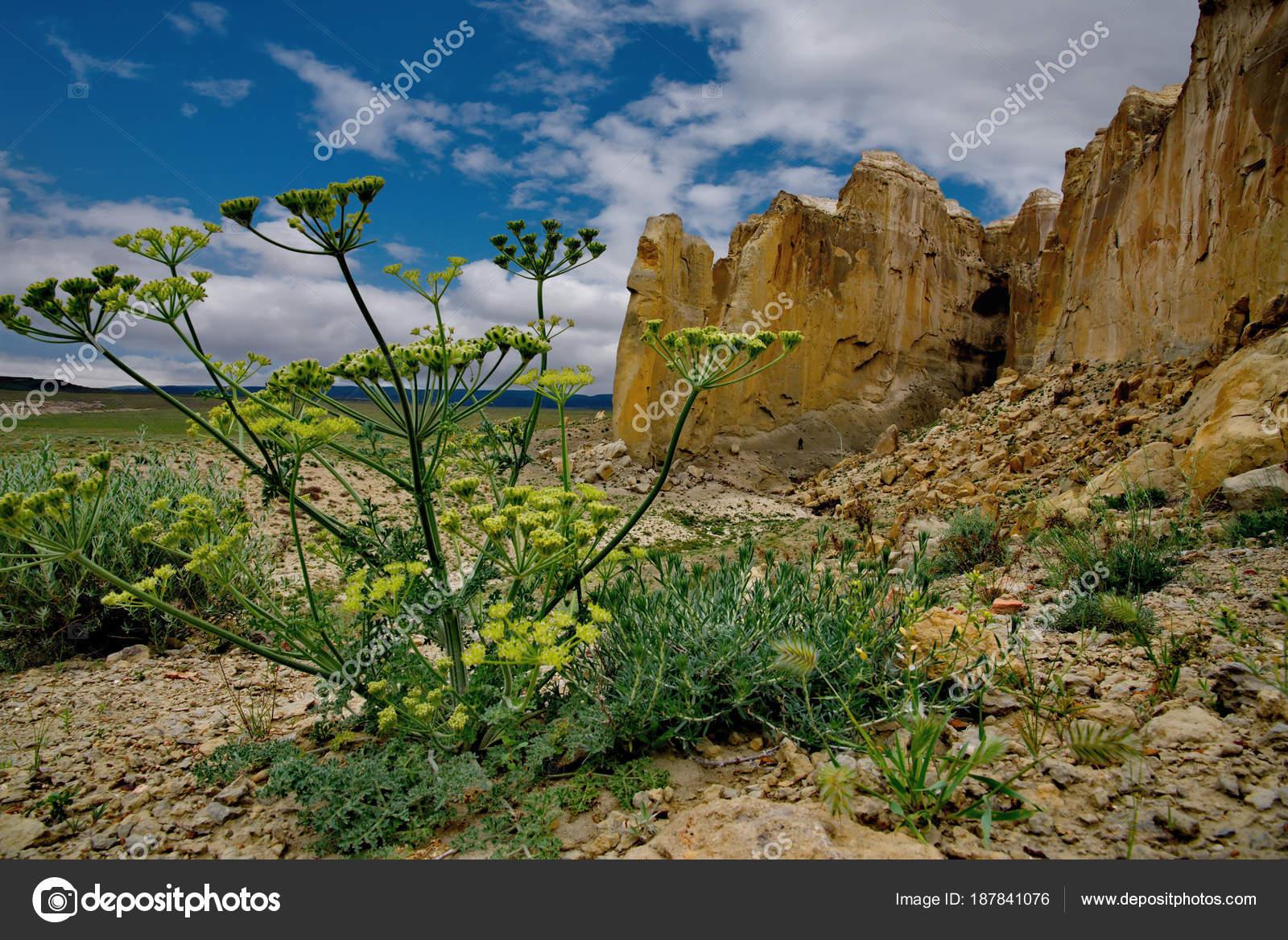 Nyugat Kazahsztáni Határtalan Sztyepp Van Egy Magányos Hegy Komplex  Shirkala — Stock Fotó 2e36dc08f2