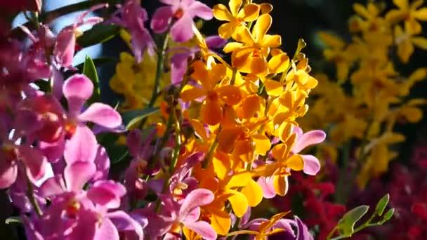 Gyönyörű orchidea virágok virágzó a kertben