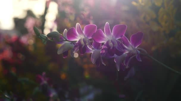 schöne Orchideenblumen blühen im Garten