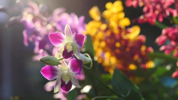 Beautiful Orchid flowers blooming in the garden
