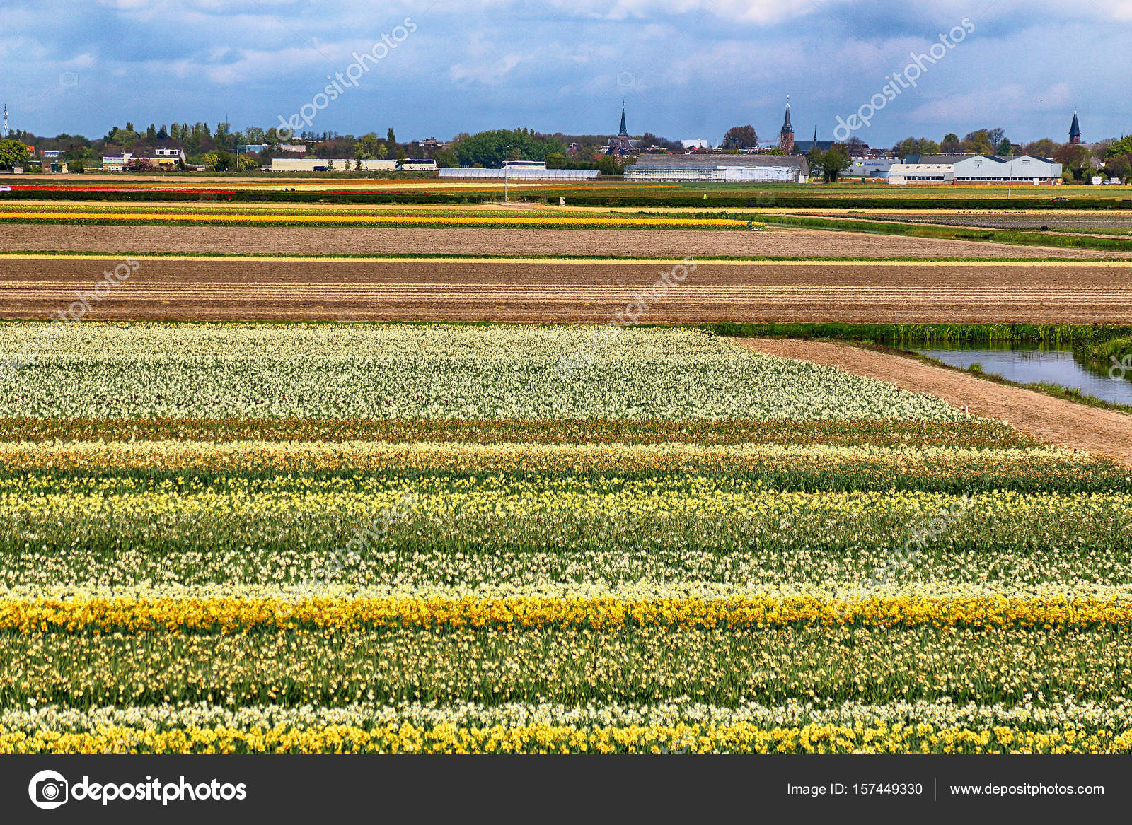 Field Of Tulips And Other Seasonal Spring Flowers Classic Dutch