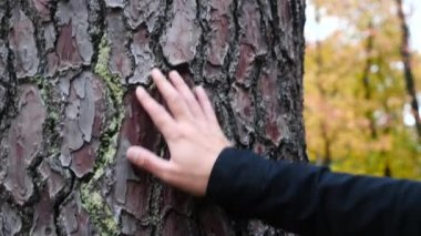 Close up, mans hand, as he feels the bark of a tree, Slow Motion. 4k
