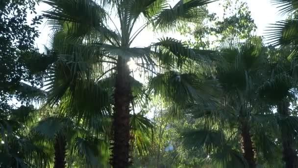 wunderschöne Natur des Urwaldes. frische Palmenblätter unter heller Sonne und tropischem Klima. 4k