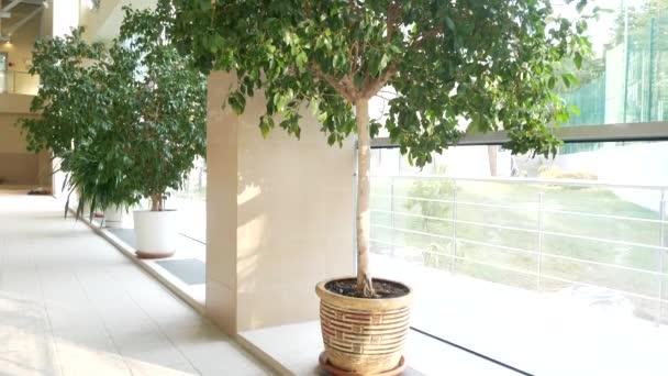 oranžerie s tropickými stromy s prosklenou střechou. 4k