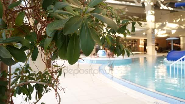Luxus resort medence, szép tiszta kék víz. az üdülő medencéjéhez 4 k. trópusi fák