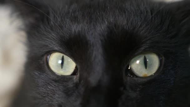 Czarny Kot Zielone Oczy