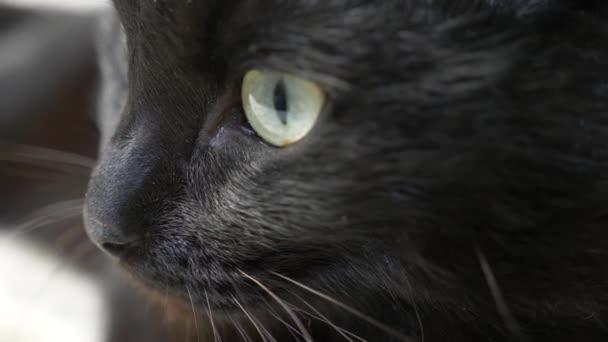 Stáhnout royalty-free Detail z roztomilé černé a bílé kočky, ležící na židli v pokoji domova video 203017244 z Depositphotos kolekce s milióny prémiových.